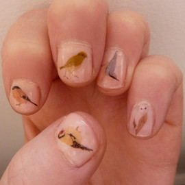Kate Broughton - mixed bird nail transfers