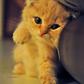 little orange kitty.