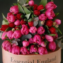 Esential England... Incredible Tulips