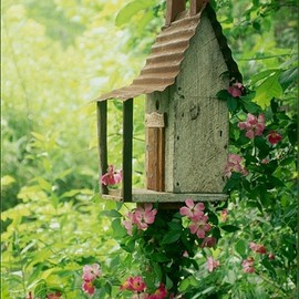 Beautiful birdhouse with climber