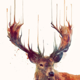 Amy Hamilton - Red Deer // Stag Art Print