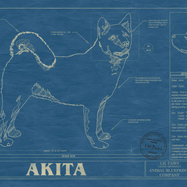 Animal Blueprint - Akita blueprint