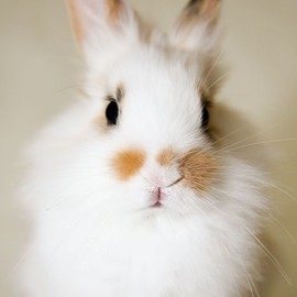 animals - cute bunny