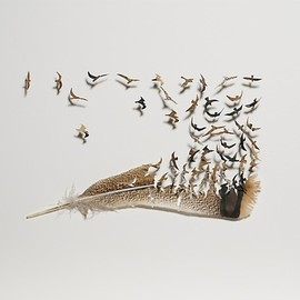 petapeta:    Lively Birds Carved Out of Natural Feathers - My Modern Metropolis