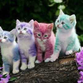 colorful kitten
