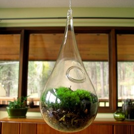TinyTerrains - Hanging Glass Living Moss Terrarium
