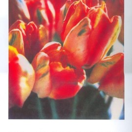 Cy Twombly - Cy Twombly Photographs