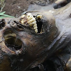 Freeman Ranch, https://sumally.com/jb000698/folders/%23gifts-esp.4-%27them%27/3278707567236901562 - #gifts esp.4 'them',Body Farm In Texas Plant Real Human Corpses For Science