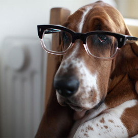 basset hound in glasses.
