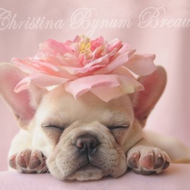 French Bulldog - Pink!