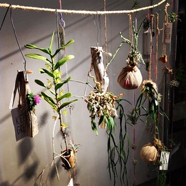 TODAY'S SPECIAL - Hanging Plants