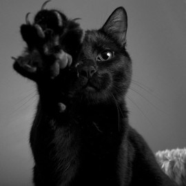 black cat paw