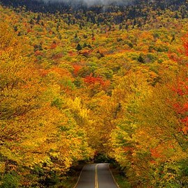 Oh wow.... I can imagine myself driving through...  (Vermont)