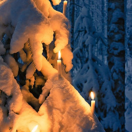 Finland - Candle Lit Tree