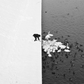 Marcin Ryczek - A Man Feeding Swans in the Snow