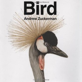 Andrew Zuckerman - Bird