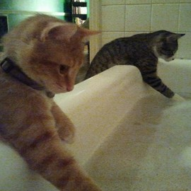 "Cats ""How do you find the bath?"" ""Just fine."""