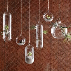 west elm - Shane Powers Hanging Glass Bubble Collection