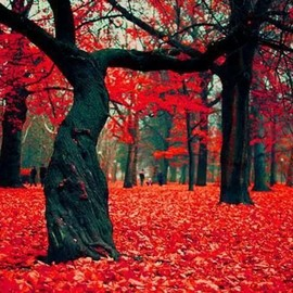 Poland - Crimson Forest