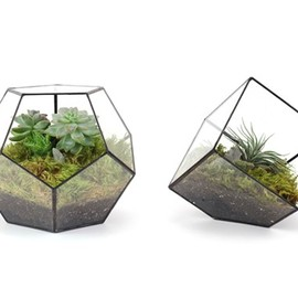 Dodecahedron and Cube Terrarium