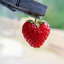 Strawberry - Heart