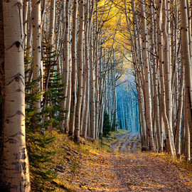 """""""Aspen Cathedral"""" by Ken Lee"""