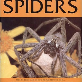 Rod Preston-Mafham - The Book of Spiders