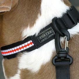 originalfake x porter - DOG COLLAR & LEASH