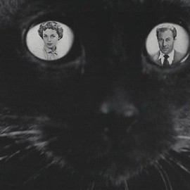 Cats in Vogue - _