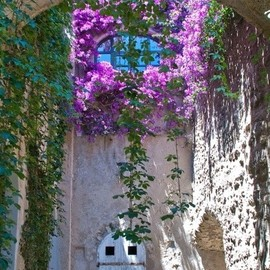 Ischia, Italy - Arch of flowers at Castello Aragonese • photo: Stuart Jack