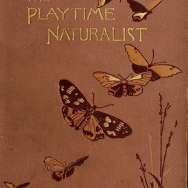 John Ellor Taylor - The playtime naturalist