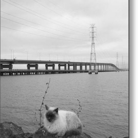 Fine Art America - Bay Bridge Kitty Metal Print By Gwendolyn Aunko