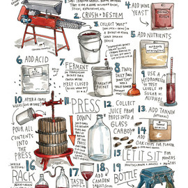 wendy macnaughton - How to Make Wine