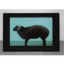 Damien Hirst - THE BLACK SHEEP WITH THE GOLDEN HORN