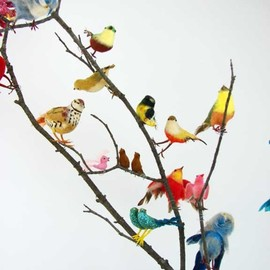 colorfully all the pretty birds
