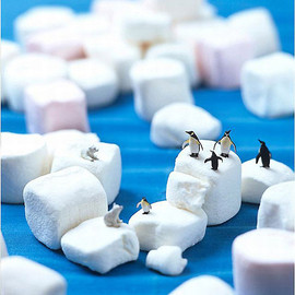 minimiam - arctic animals playing on top of marshmallow icebergs
