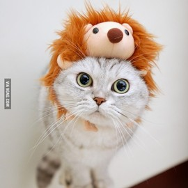 Lion Kitty
