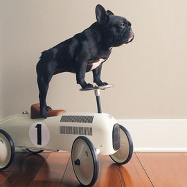 French Bulldog - this dog has the coolest toys!