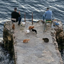 Fisherman & Cats