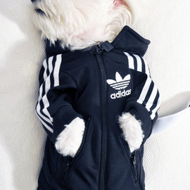 adidas - A Custom Dog Tracksuit