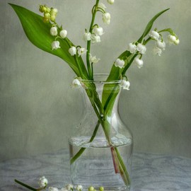 Mandy Disher - Lily of the valley