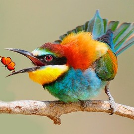 Spectacular Bee-eater!