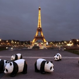 Cute Panda Bears in Paris