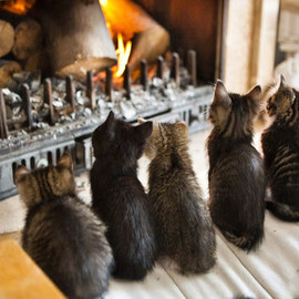cats front of fire