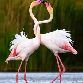 Pink Flamingos Love!