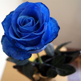 Blue Vendela Rose