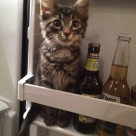 Hmm,Cat Or Beer?