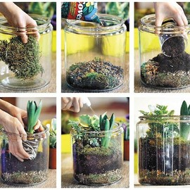 diy plant terrarium by nicole cammorata of scarlet and sterling