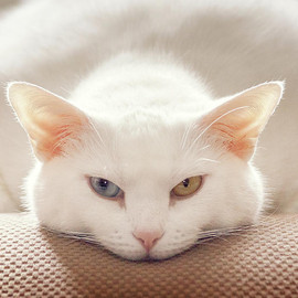 Fine Art America - Cat Expression Photograph  - Cat Expression Fine Art Print