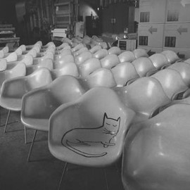 Eames - Cats Love Eames!